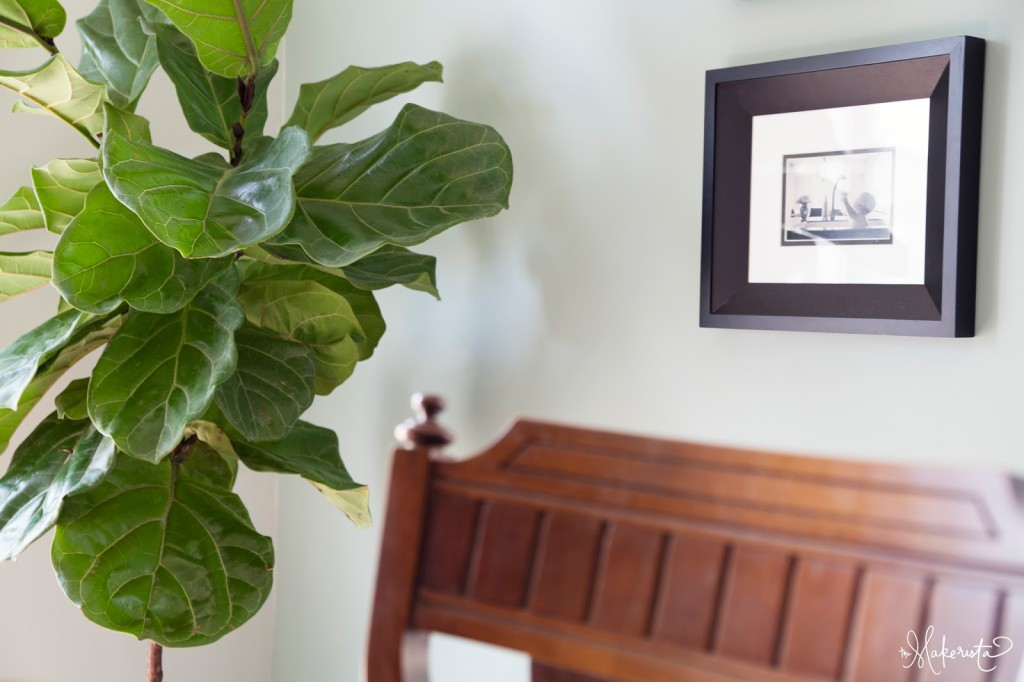making a home adding easy and affordable houseplants to your space