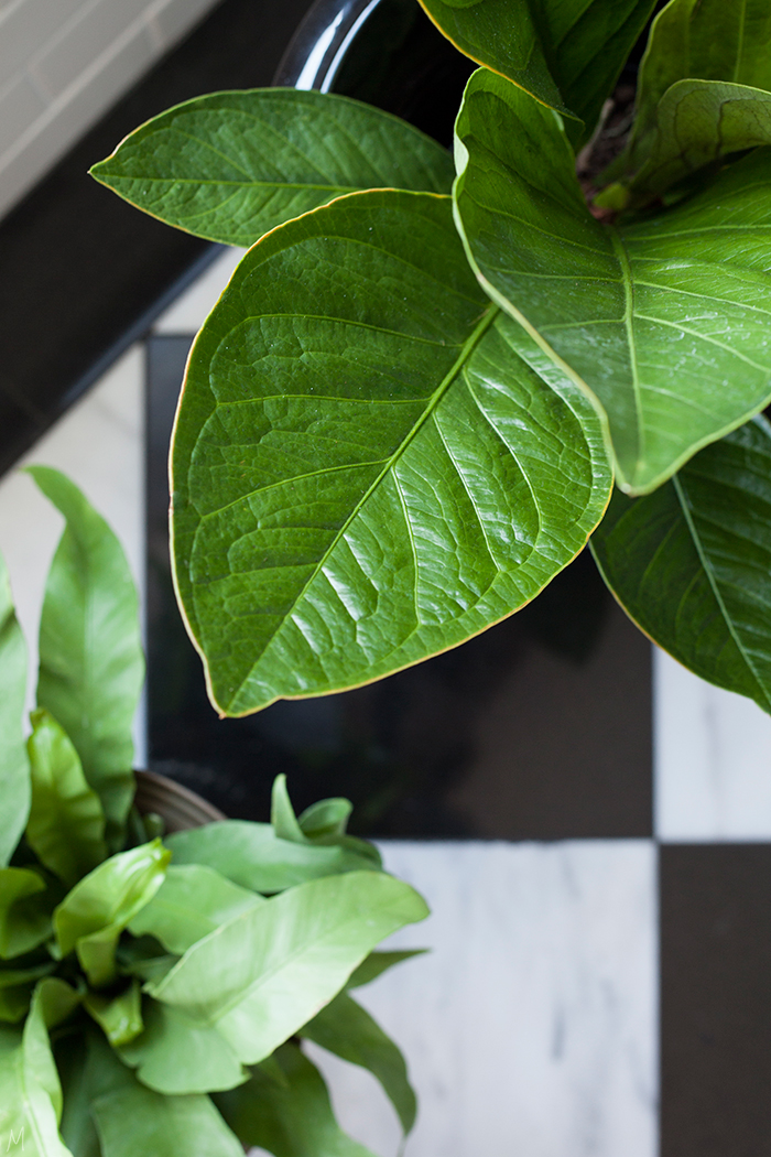 The-Makerista-How-to-Care-for-Indoor-Plants-IMG_5408